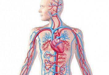 El sistema venoso: estructura y función