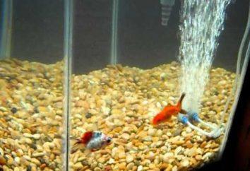 """""""Munk"""" (ICH) en los peces de acuario. La cura para el """"mono"""" en el pescado"""