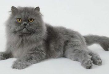 Dlaczego powstają maty kota. Jak się ich pozbyć?