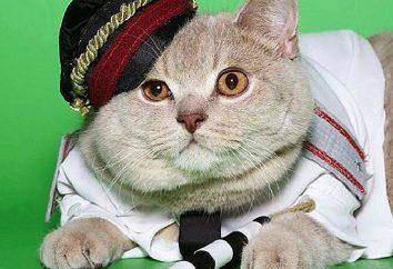 Który kot jest najbardziej znany?
