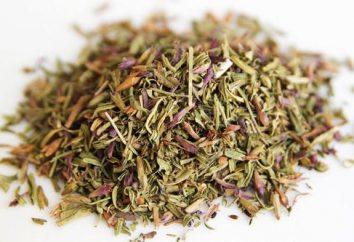Herb hyzop lekarski