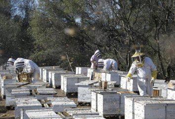 Apiculture industrie – qu'il est nécessaire? Les marchandises pour l'apiculture. cours apicoles