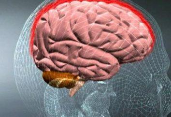 Zapalenie opon mózgowych: objawy u dorosłych, leczenie choroby