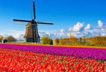 Co zabrać ze Amsterdamie jako prezent?