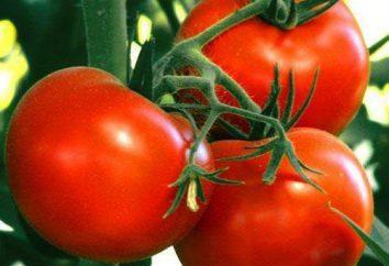 Boney-MM Tomate: avis, la description de la variété et de plus en plus