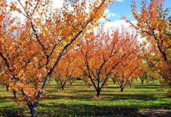 Il giardinaggio in autunno. Cosa fare nel giardino in autunno?