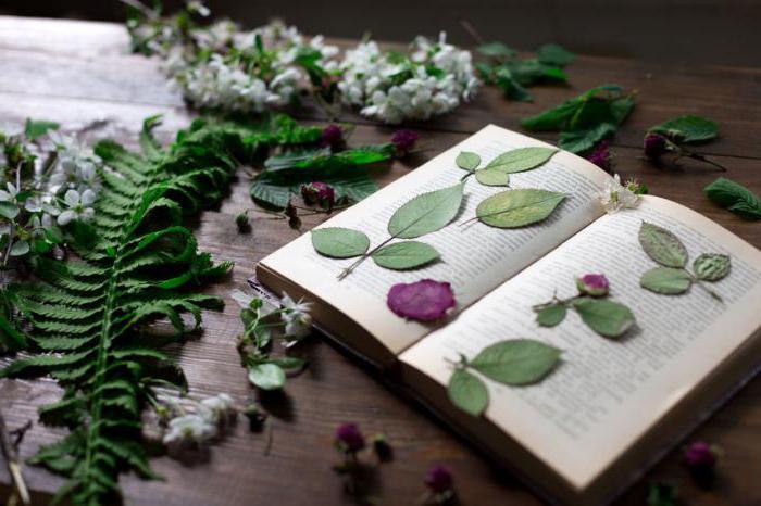 was ist ein herbarium und wie man es machen. Black Bedroom Furniture Sets. Home Design Ideas