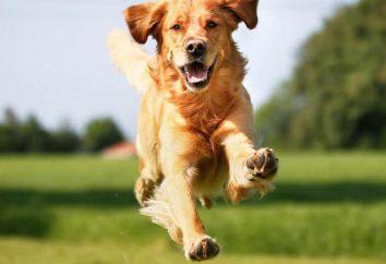 Erste Hilfe für Hund beißt: was zu tun ist?