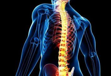 El shock medular: mecanismos de desarrollo, síntomas y características del tratamiento