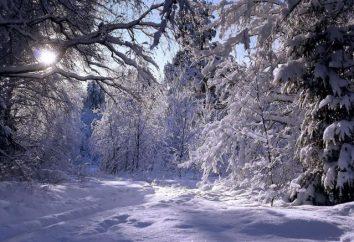 eventos de invierno en la vida de las plantas. Características de descanso