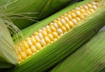 Wczesne kukurydza: uprawa, nawożenie, pielęgnacja