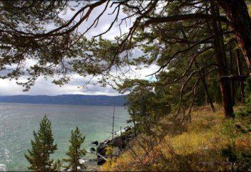 Ushkany Islands: opis, historia, flory i fauny