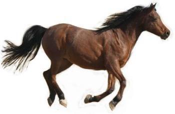 Interprétation des rêves: rêver de ce qu'un cheval ou un cheval