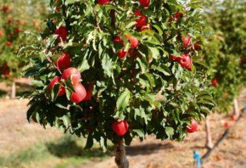 Drzewa karłowate: Zalety i wady