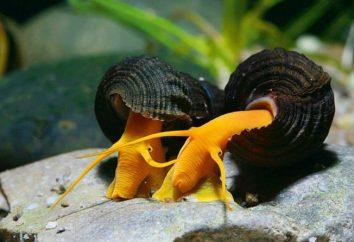 Les escargots se nourrissent de la maison et dans la nature