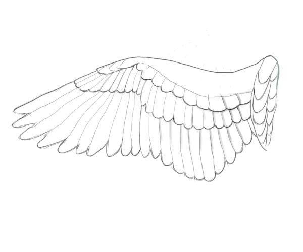 Wie Flügel ziehen? Unterricht für Anfänger
