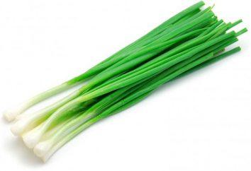 É possível congelar cebolas verdes e como – várias maneiras e revisões