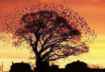 """Tajemnica poematu """"nadeszła jesień, kwiaty wyschły"""""""