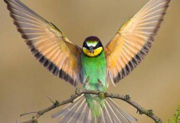 Bird – un animal ou non? Oiseaux de classe