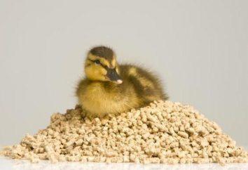 Was eine Ente zu füttern? Hilfreiche Ratschläge