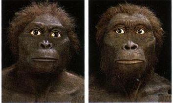 Homo sapiens (Homo sapiens) – aspetto, unendo la natura biologica e sociale