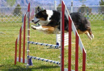 Balabanov Ivan: szkoła szkolenia psów