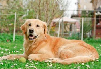 Tabletki z robakami do psów przed zaszczepieniem. Tabletki robaków dla efektów ubocznych psy