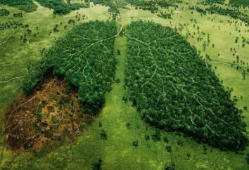 consciência ambiental dia. Por que é importante preservar a natureza?