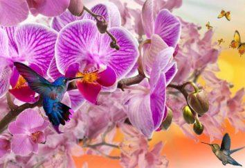 """Fertilizzanti """"Bona Forte"""" dare la vostra salute e la bellezza delle orchidee"""