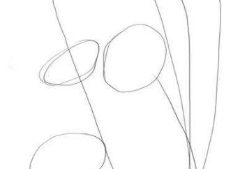 Jak narysować chaber łatwo i szybko?