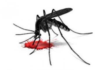 fenomeno Mosquito: molte zanzare pungono dal vivo dopo?