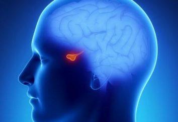 Klasyfikacja hormonów. Rola hormonów w organizmie człowieka