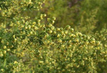 Artemisia annua contra el cáncer