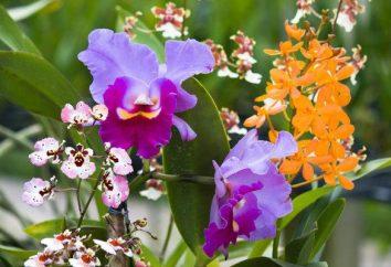 Kwiaty w próżni: opinie. Świeże kwiaty w szkle. oryginalne prezenty