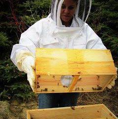 Auges pour les abeilles avec leurs propres mains (photo)