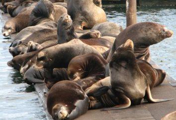 lwy morskie … W jaki sposób różnią się one od innych uszczelnień?