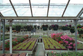 Blumen im Gewächshaus als Unternehmen zu wachsen. Businessplan Blumenzucht