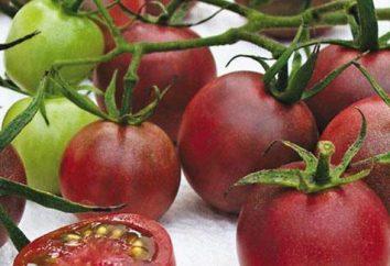 Pomodoro Cioccolato: caratteristiche varietà