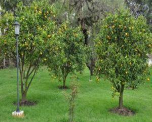 Obstbäume und Sträucher. Obstbäume und Sträucher