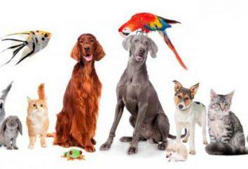 Pet – è una grande responsabilità