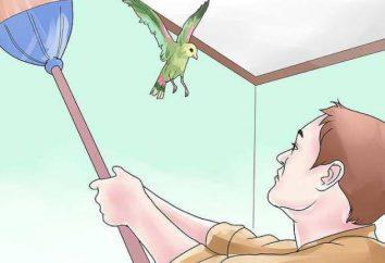 Pourquoi rêve d'oiseau a volé dans la maison? La réponse racontera le livre de rêve