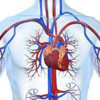 NTSD del tipo cardial – ¿qué es? Descripción del diagnóstico