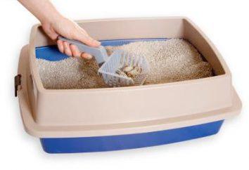 O enchimento para gatos melhor? Para escolher