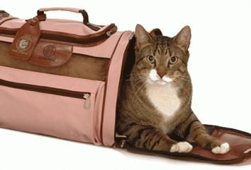 Wymagane gospodyni atrybut mruczenie puszysty – nośnik dla kotów