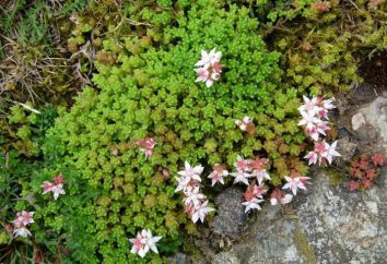 Gatchina pépinière « Flora Nord »