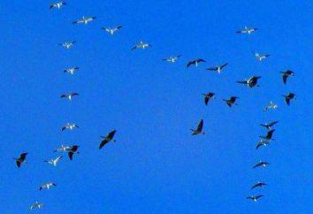 Dia Bird International – 01 de abril. Dias Internacionais de Observação de Aves