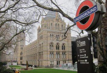 Natural History Museum w Londynie – historia życia na Ziemi