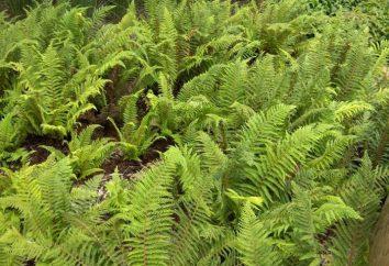 plantas de esporas: ejemplos, características, variedad