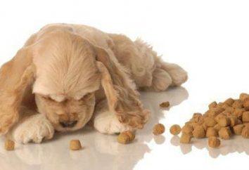Dog food 'Querida': comentários