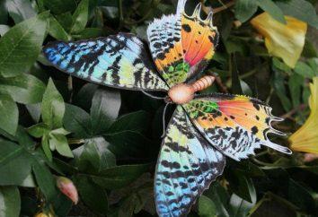 Der schönste Schmetterling. Der Name der schönsten Schmetterlinge der Welt